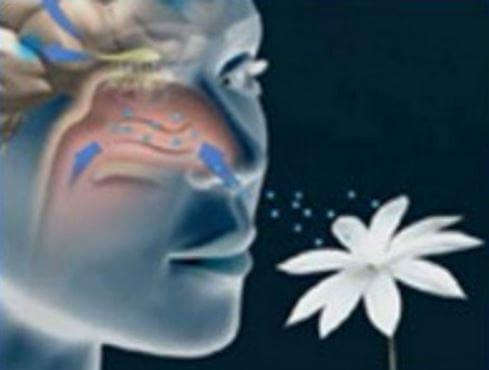 Дизосмия – что это и почему она возникает?